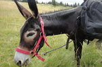 Esel-Schrittwanderung mit Pachamama und Asiago Guide - 22. September 2019