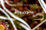Marcesina-Biodiversität von Feuchtgebieten zu Berge-Freitag, 10. August 2018