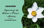 Esperienza di natura e poesia: i narcisi -- Mercoledì 1 Maggio 2019