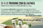 Für den Wald mit Alpakas - Sonntag 30 Juni 2019