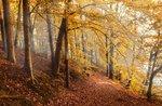 Jeder an Bord des Zuges für eine Reise in den Wäldern der Farben - 25 Oktober 2020