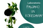 "Workshop ""Create your Kokedama"" in Gallien - 26. August 2019"