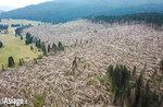 Live-Video von der Pflanzung neuer Bäume in den Wäldern von Enego, die von Vaia mit WOWnature zerstört wurden - 23. Mai 2020