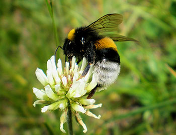 fiori api impollinazione