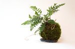 "Workshop ""Create your Kokedama"" in Gallien - 24. Juli 2019"