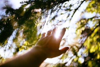 mano tesa verso alberi