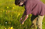 Besuchen Sie aromatische und medizinische Pflanzen-Antonio und Lisa Caley Plateau