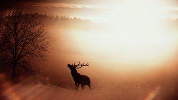 escursione con bramito del cervo ad asiago