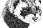 """Beliebte Abend """"the Mammals of der Region Venetien und der Regionalatlas-Projekt"""""""