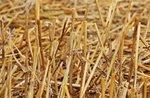 """""""The Art of Straw"""" auf der Asiago Foliage 2020 - 17. und 18. Oktober 2020"""
