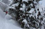 """Exkursion """"Ciaspe 4all: in den Wald mit Schnee"""" mit Asiago-Guide"""