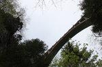 """Exkursion """"7 Gemeinden: ROANA eine Brücke für die sechs Türme, ASIAGO GUIDE, 20 August"""