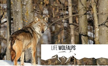 Progetto Wolfalps