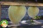Laboratorio sul mondo delle api al Cason delle Meraviglie, 21 agosto 2016