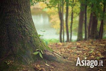 bagno di foresta a cesuna 2021