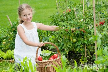 bambina raccoglie pomodori