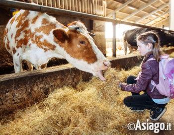 bambini in malga con la mucca