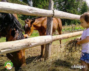 bimba con cavalli a il cason delle meraviglie n1