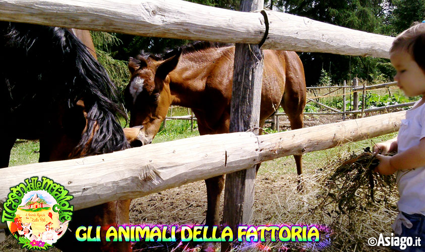 Bambini animali della fattoria cason delle meraviglie 31 for Planimetrie rustiche della fattoria