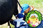 Kinder auf dem Bauernhof Tiere Carlson 03/08-Wonderland Treschè Laver