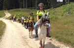Roan Pferd, Pony Schule Spielplatz, Teich Roana Hochebene von Asiago