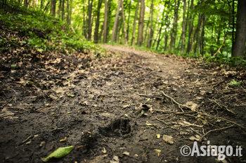 impronte di animali nel bosco