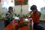 Laboratori naturalistici per Asiago Foliage a cura del Museo Naturalistico Patrizio Rigoni - 20 e 21 ottobre 2018