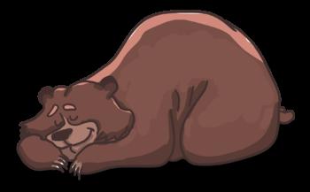 orso appisolato