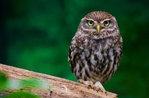 """Erzählung und Labor """"für einen Tag... in OWL ich geworden,"""" al Museo Naturalistico di Asiago-August 25, 2017"""