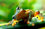 "Naturalistische Labor ""der Frosch Mangiona"", Museo Naturalistico di Asiago-22 August 2017"