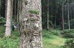 """""""Das Gesicht der Bäume und ihre verborgenen Geschichten""""-Exkursion und Labor von Museo Naturalistico di Asiago-11 August 2018"""