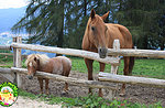 Gli animali della fattoria al Cason delle Meraviglie. Giovedì 13 Agosto.