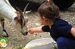 """""""Das Baby in Stiefeln"""" - Aktivitäten für Kinder auf dem Bauernhof im Cason der Wunder - 11. August 2019"""