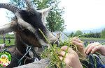 Bauer für einen Tag zum 2. August 2015 Wunderland Cason