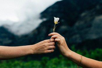 mani di donne che si scambiano fiore