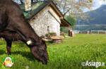 Grüne Wochen auf dem Bauernhof im Cason der Wunder von Trescha Conca di Roana - Sommer 2020