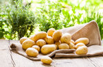 Spaziergang und sammeln Kartoffeln ins 6. August im Treschè Becken-2018