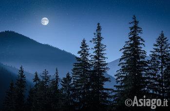 bosco di notte