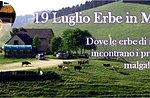 Erbe in malga Asiago Guide