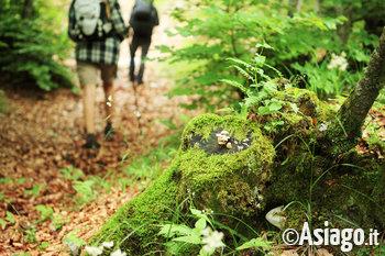 Passeggiata di gruppo a Camporovere di Roana