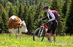 Itinerari e Percorsi per Mountain Bike (MTB) sull'Altopiano di Asiago