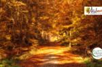 Escursione a piedi storico-naturalistica con Asiago Guide - 24 ottobre 2020