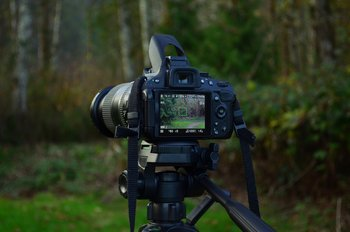 macchinetta fotografica nel bosco