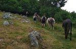 ASINI IN CAMMINO - Trekking mit Eseln in Fort Corbin - 30. August 2020