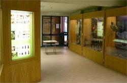 Interno del Museo Naturalistico Patrizio Rigoni