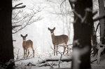 """Ausflug mit den Wildhüter von der naturalistischen Museum pädagogische """"Patrizio Rigoni"""" di Asiago-4 Januar 2019"""