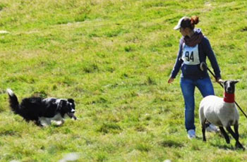 Asiago Sheepdog Trials