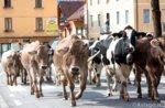 Malga Scargar Zentrum: die Camplan Bauernhof Transhumanz 4. Oktober 2015