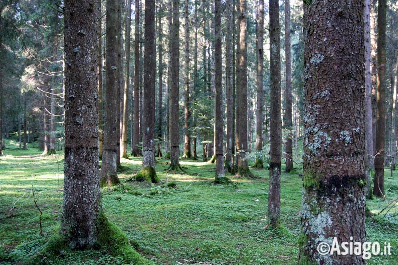 bosco del prunno