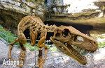 Rinvenuto lo scheletro di un dinosauro sull